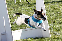 Flyball Dog Tournaments
