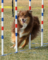 ASANM Agility Trial 3/11/12 Pt 3 Of 4