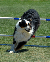 ZIA Agility, 4/21-22/12 - Pt3of4