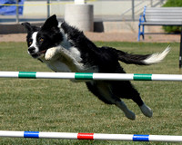 ZIA Agility, 4/21-22/12 - Pt4of4